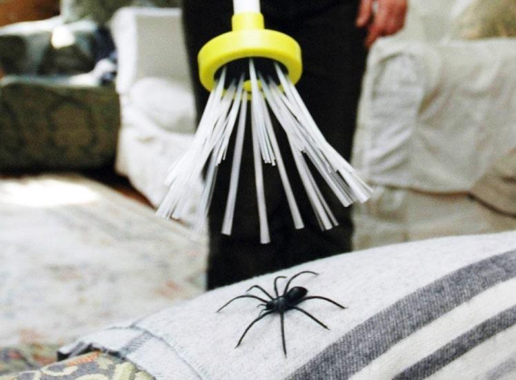 spider catcher se d barrasser des araign es sans les tuer. Black Bedroom Furniture Sets. Home Design Ideas